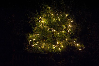 Outdoor Fairy Lights Hire