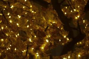 LED Tree Hire